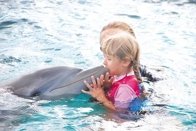 Dolphin_Aid_06